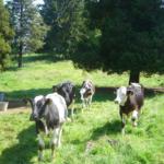 Bauernhof Sesterhenn