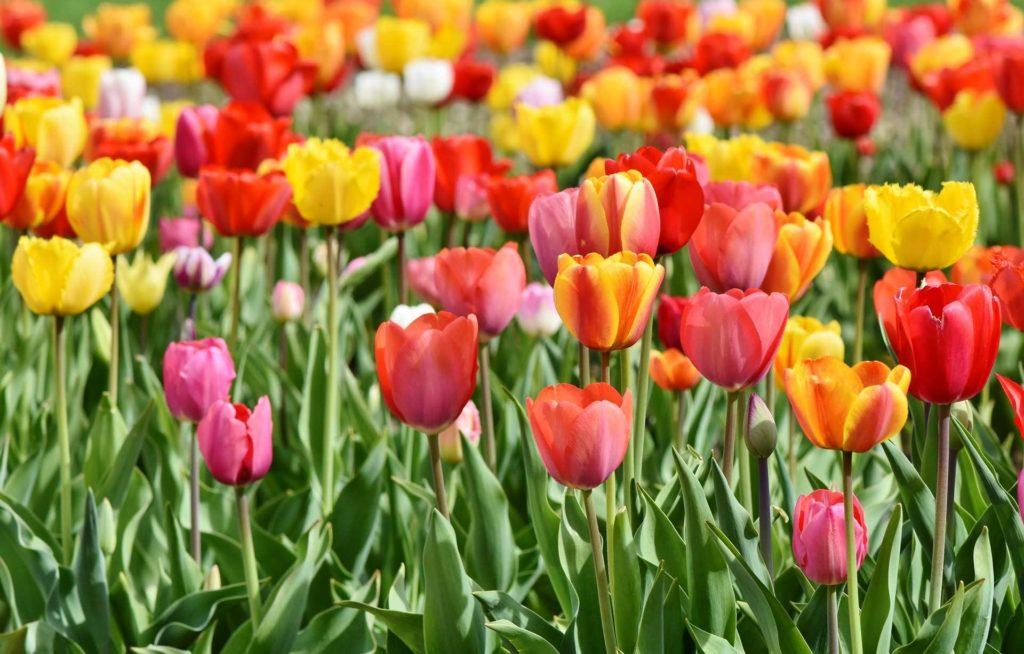 Blumen selber schneiden