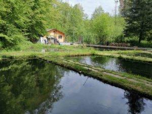 Fisch und Wein am Forellenhof Abrahams @ Abrahams Forellen