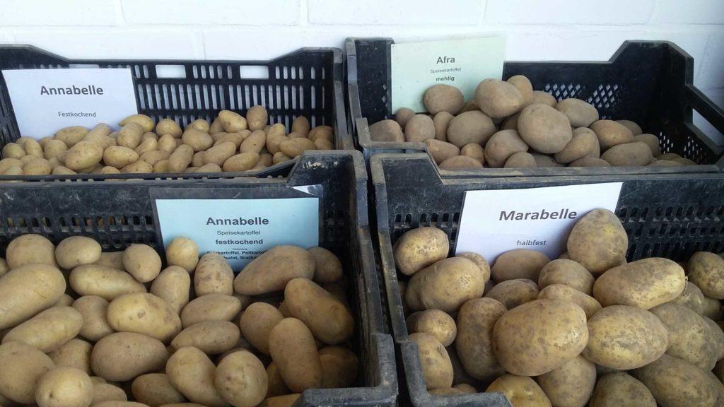 Kartoffeln vom Bauernhof Sesterhenn